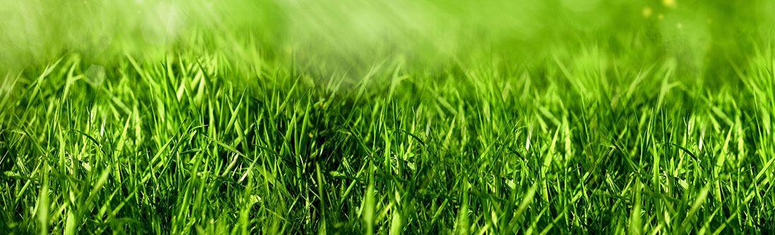 Модульная картина «Зеленая трава»