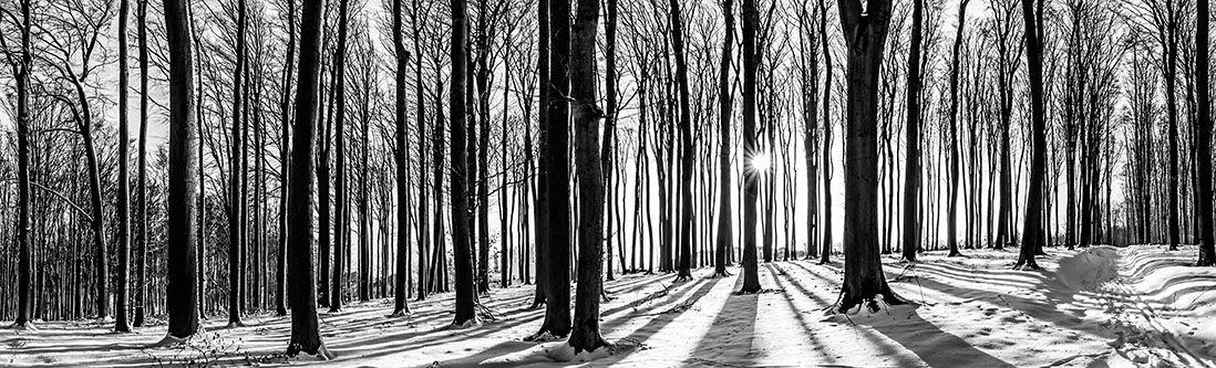 Модульная картина «Зимний лес в оттенках серого»