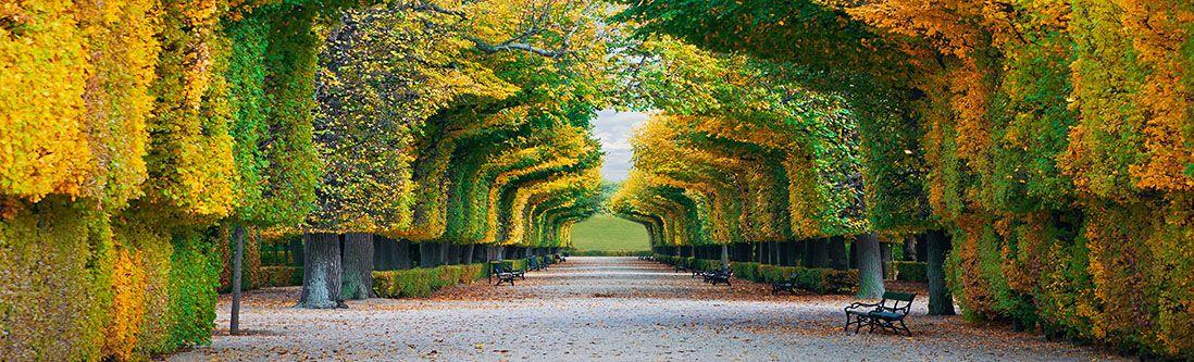 Модульная картина «Аллея аркой из деревьев»