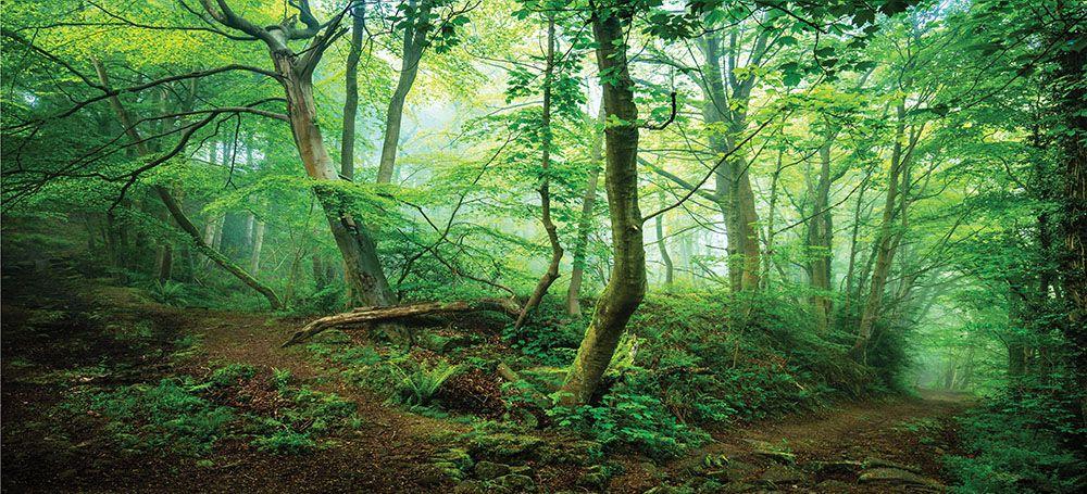 Модульная картина «Зеленые джунгли»