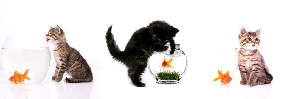 Модульная картина «Котята и аквариум с рыбками»