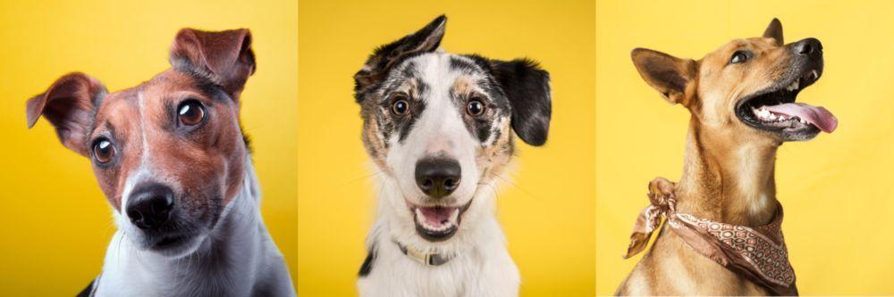 Модульная картина «Разновидность собак»