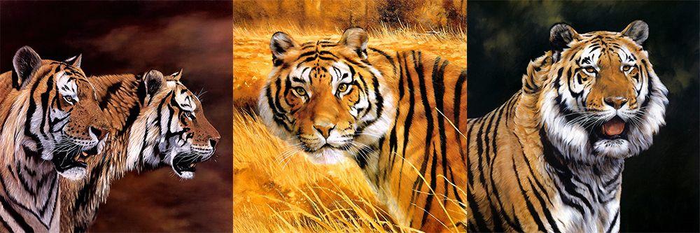 Модульная картина «Тигр в поле вечером»