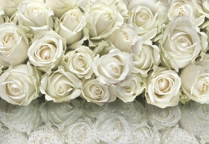 3D Фотообои «Белые розы на стекле»