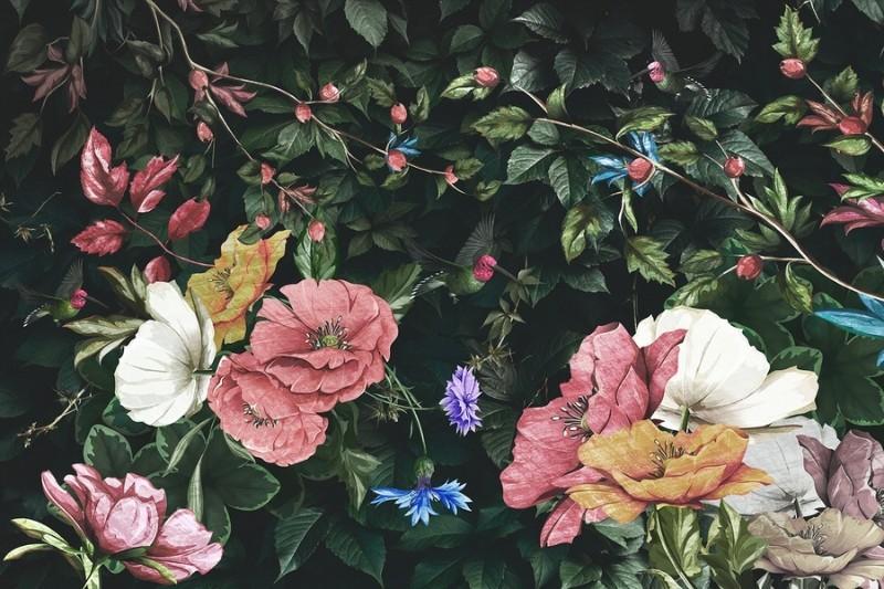 3D Фотообои Фотообои «Колибри в цветущем саду»
