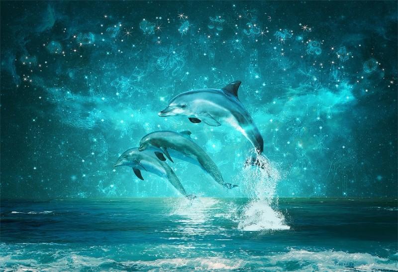 3D Фотообои «Дельфины под звездным небом»