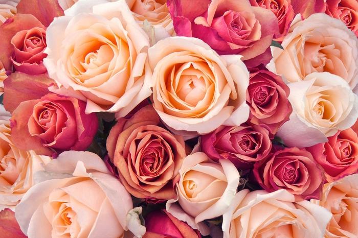 3D Фотообои «Ассорти из роз»