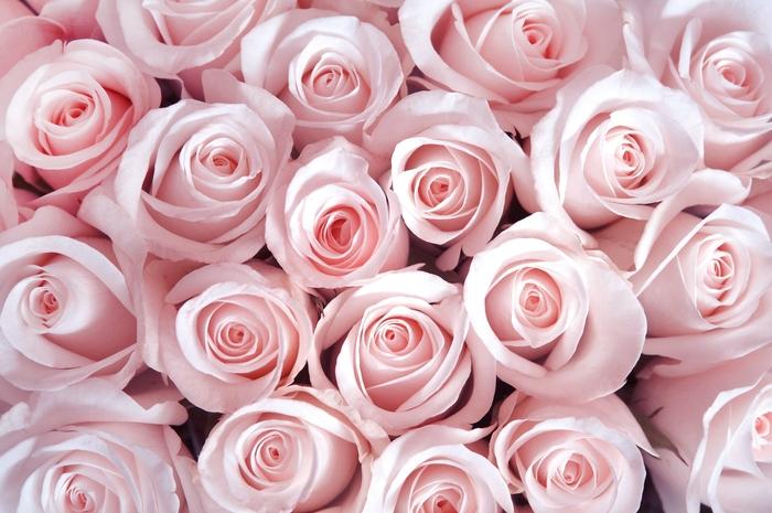 3D Фотообои «Благоухающий букет нежных роз»