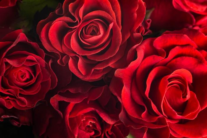 3D Фотообои 3D Фотообои «Бордовые розы»