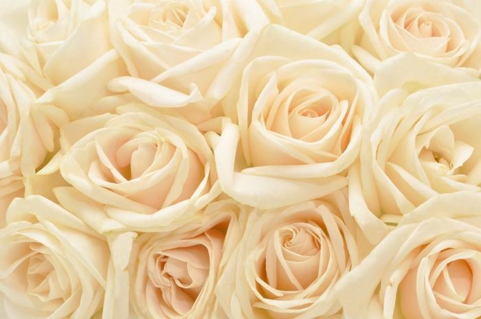 3D Фотообои 3D Фотообои «Ковер из бежевых роз»
