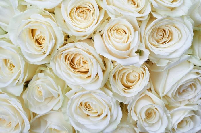 3D Фотообои «Нежные кремовые розы»
