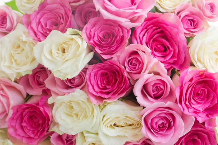 3D Фотообои 3D Фотообои «Нежные розы»
