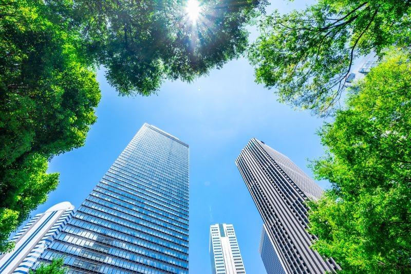 3D Фотообои «Зеленые деревья в мегаполисе»