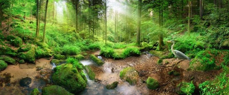 3D Фотообои «Солнечный день в зеленом лесу»