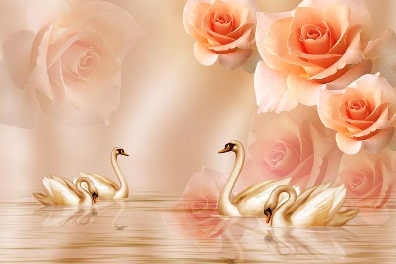 3D Фотообои «Неразлучные лебеди»