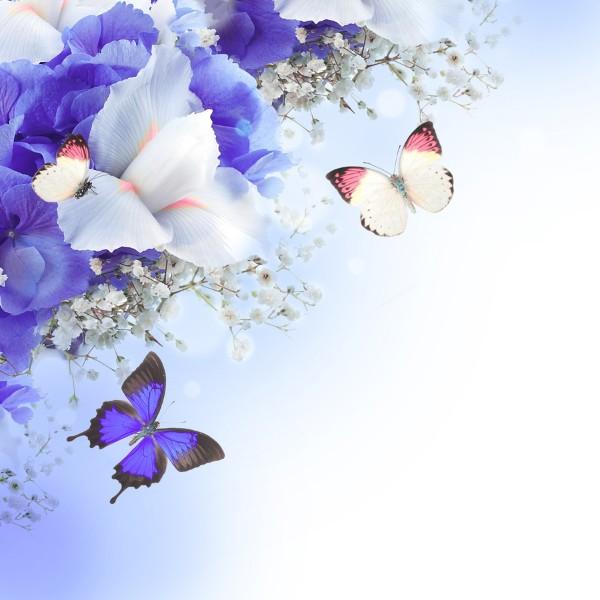 3D Фотообои «Бабочки под нежными цветами»