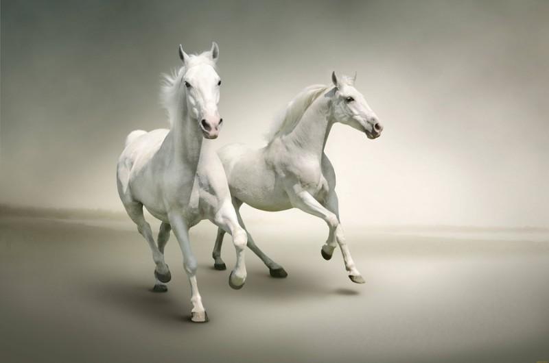 3D Фотообои 3D Фотообои «Белые лошади на сером фоне»