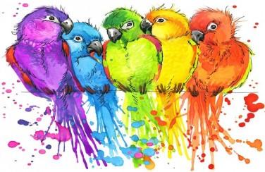 3D Ковер  «Яркие попугайчики»
