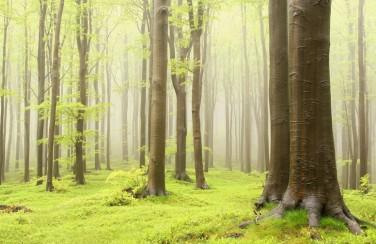 3D Ковер «Зеленый лес»