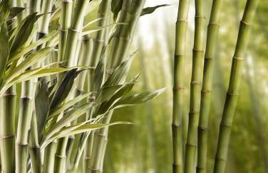 3D Ковер «Бамбук»