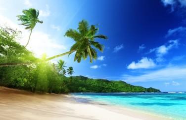 3D Ковер «Пальма на пляже»