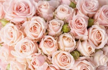 3D Ковер «Кремовые розы»