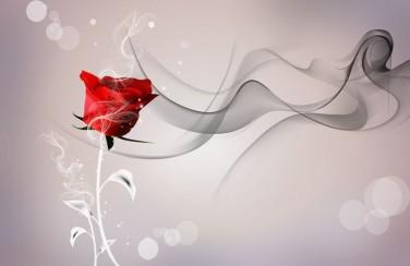 3D Ковер «Красная роза на сером фоне»