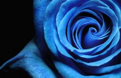 3D Ковер «Синяя роза»