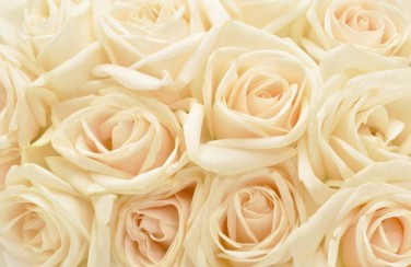 3D Ковер «Ковер из бежевых роз»