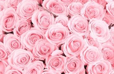 3D Ковер «Ковер из нежно-розовых роз»