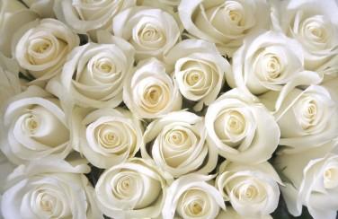 3D Ковер «Нежные белые розы»