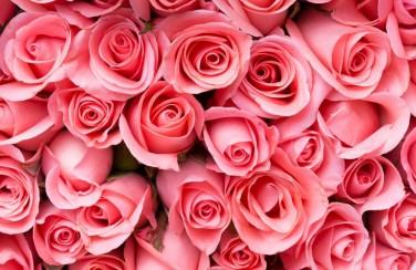 3D Ковер «Обилие роз»