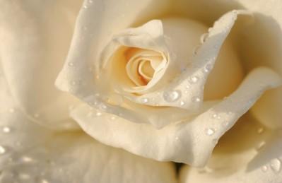 3D Ковер «Утренняя роза»
