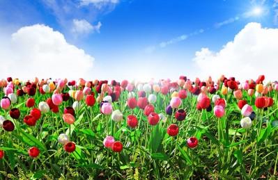 3D Ковер «Яркие тюльпаны»