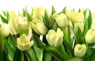 3D Ковер «Тюльпаны с каплями росы»