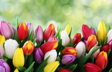 3D Ковер «Разноцветные тюльпаны»