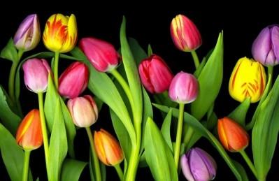3D Ковер «Тюльпаны на темном фоне»