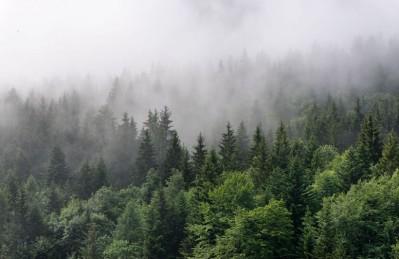 3D Ковер «Утро в хвойном лесу»