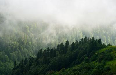 3D Ковер «Туман над зелеными вершинами»