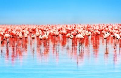 3D Ковер «Фламинго»