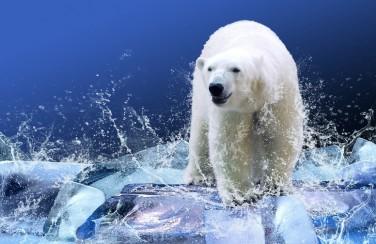 3D Ковер «Белый медведь на льдине»