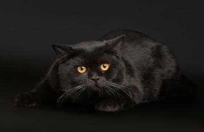 3D Ковер «Чёрный кот»