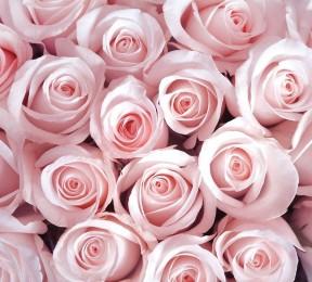 Фотошторы «Благоухающий букет нежных роз»