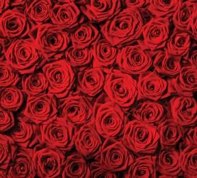 Фотошторы «Миллион алых роз»