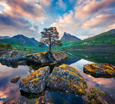 Фотошторы «Дерево на камнях»
