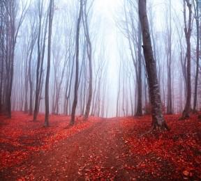 Фотошторы «Осенний лес в тумане»