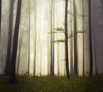 Фотошторы «Туман в мистическом лесу»