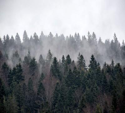 Фотошторы «Задумчивый лес»