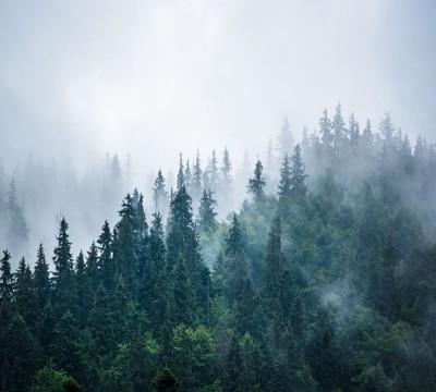 Фотошторы «Туманное утро»