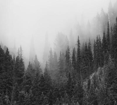 Фотошторы «Черно-белый лес в тумане»